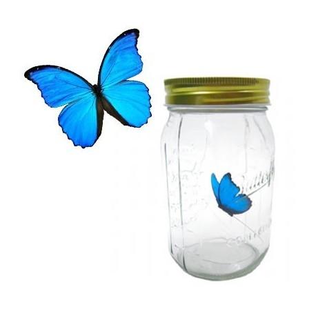 Věčný motýl